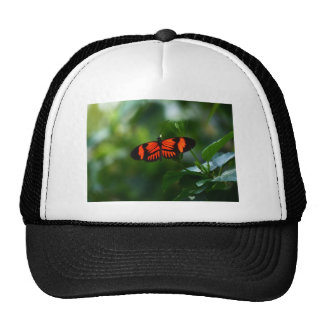 Beautiful Fiery Red and Black Butterfly Cap