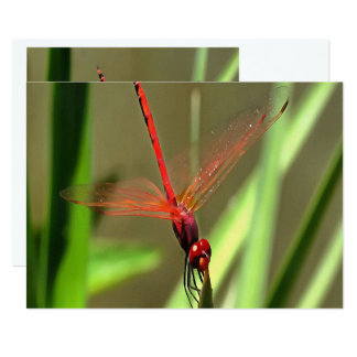 Beautiful Firecracker Dragonfly Card