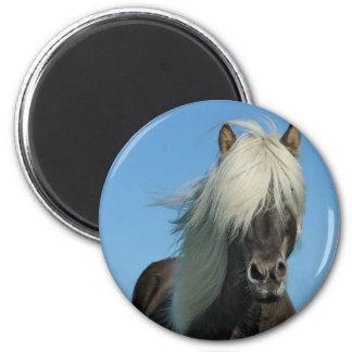 BEAUTIFUL FJORD PONY HORSE STALLION MAGNET