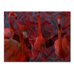 "Beautiful ""Flamingo Dance"" Pink Postcard"