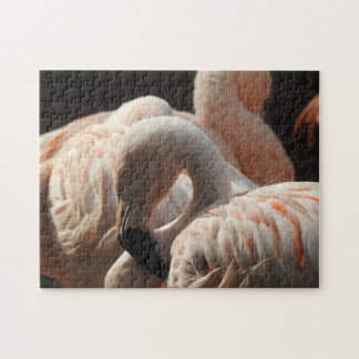 Beautiful Flamingo Jigsaw Puzzle