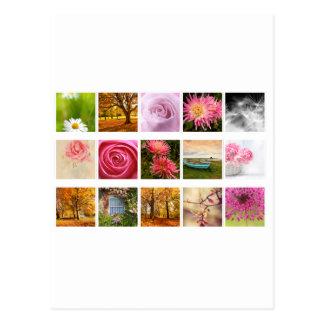 Beautiful Floral composition Postcard