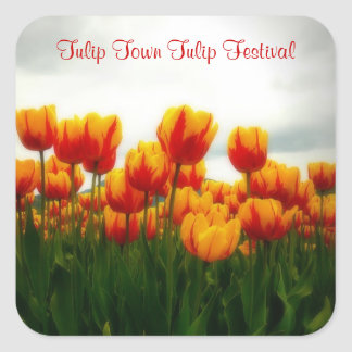 Beautiful  Floral Photo - Tulip Blooms Square Sticker