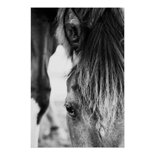 """Beautiful friend Horse """"poster"""" Poster"""