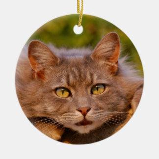 Beautiful furry cat outside portrait round ceramic decoration