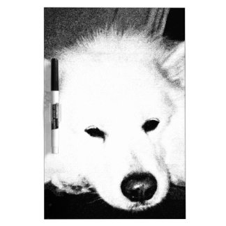 Beautiful furry Samoyed white dog Dry-Erase Boards