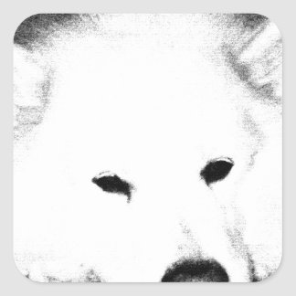 Beautiful furry Samoyed white dog Square Sticker