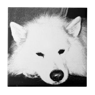 Beautiful furry Samoyed white dog Small Square Tile