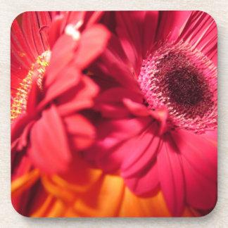 Beautiful Gerberas closeup Coasters