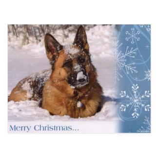 Beautiful  German Shepherd Dog in snow Postcard