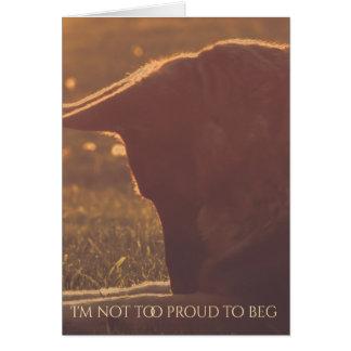 Beautiful German Shepherd Valentine's Day Card