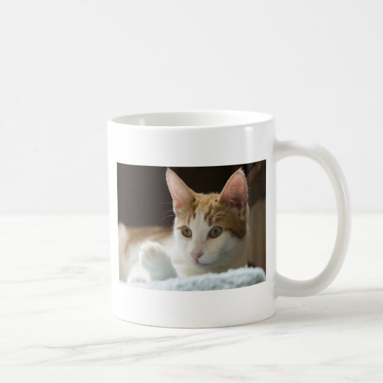 beautiful ginger and white cat coffee mug