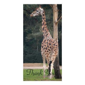 Beautiful Giraffe Customized Photo Card