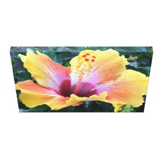 Beautiful Golden Cream Hibiscus Canvas Print