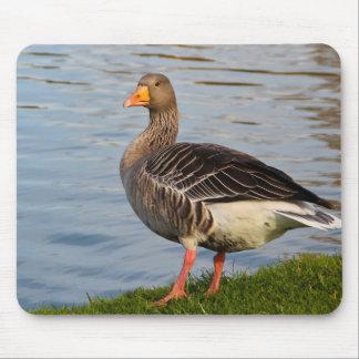 Beautiful goose bird mouse pads