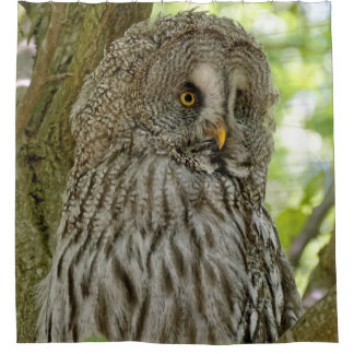 Beautiful Great Grey Owl Print Shower Curtain