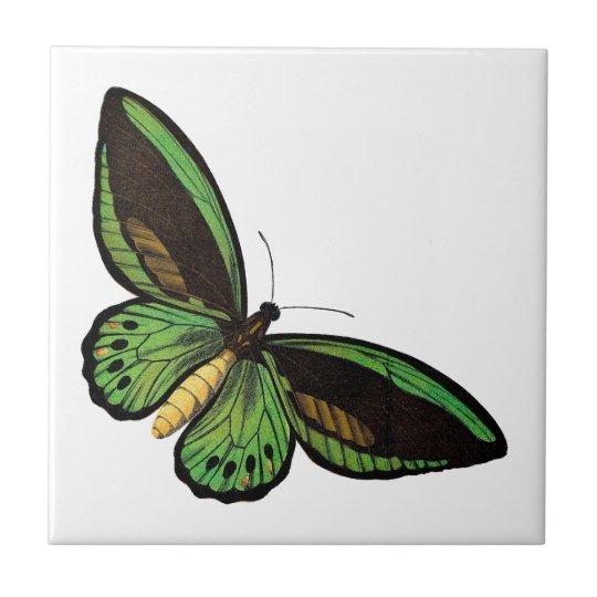 Beautiful Green Butterfly Tile