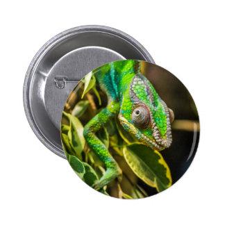 Beautiful green chameleon 6 cm round badge