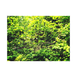 Beautiful Green Forest Canvas Print