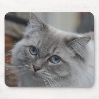 Beautiful Grey Cat with Blue Eyes Mouse Pad
