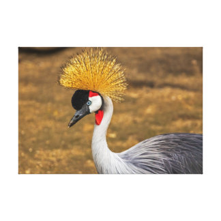 Beautiful grey Crane bird Canvas Print