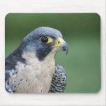 Beautiful grey-white Pelegrine Falcon Mouse Mats