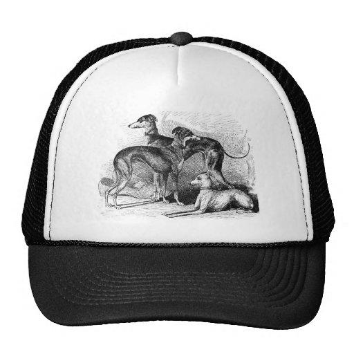 Beautiful Greyhounds Mesh Hats