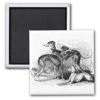 Beautiful Greyhounds Square Magnet