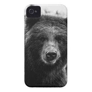 Beautiful Grizzly Bear Photo iPhone 4 Cases