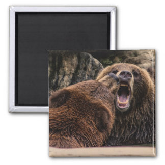 Beautiful Grizzly Bears Square Magnet