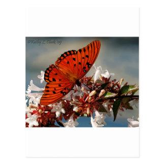 Beautiful Gulf Fritillary Butterfly Post Cards