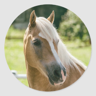 Beautiful haflinger horse portrait classic round sticker