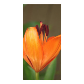 Beautiful half blooming golden tiger lily photo cards