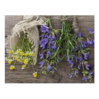 beautiful herbal background postcard