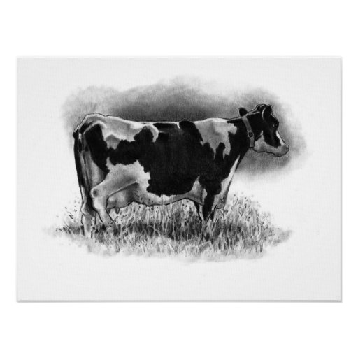 Beautiful Holstein Cow in Pencil: Original Art Poster