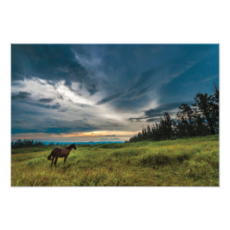 Beautiful horse and landscape print photo print