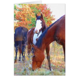 Beautiful Horse Birthday Cards