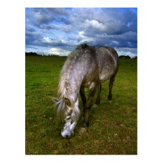 Beautiful horse close up postcard