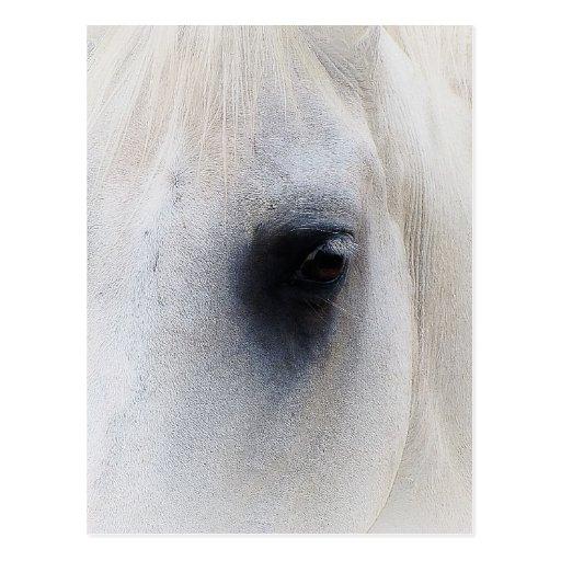Beautiful Horse Eye Postcard