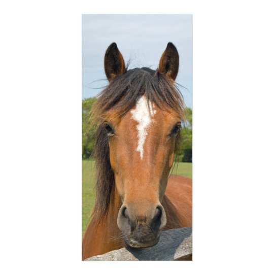 Beautiful horse head bookmark, gift idea rack card