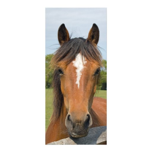 Beautiful horse head bookmark, gift idea customized rack card