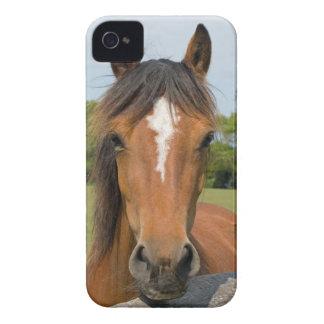 Beautiful horse head chestnut blackberry bold case
