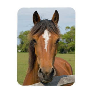 Beautiful horse head chestnut photo magnet