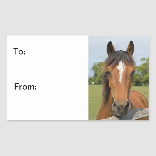 Beautiful horse head chestnut photo stickers