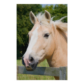 Beautiful horse head palamino photo poster, print