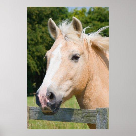 Beautiful horse head palamino photo poster, print