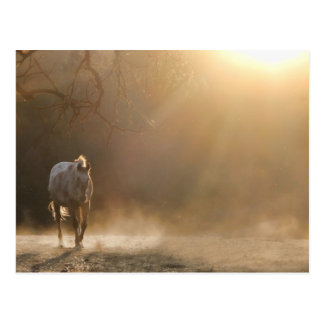 Beautiful Horse in Sunlight Gifts Postcard