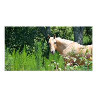 Beautiful Horse photocard Picture Card