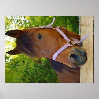 Beautiful Horse Poster