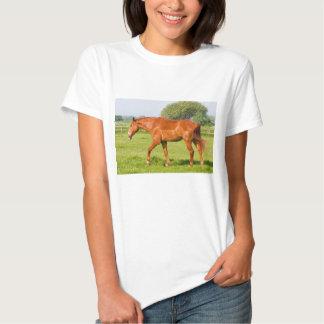 Beautiful horse womens,  ladies t-shirt, gift shirt